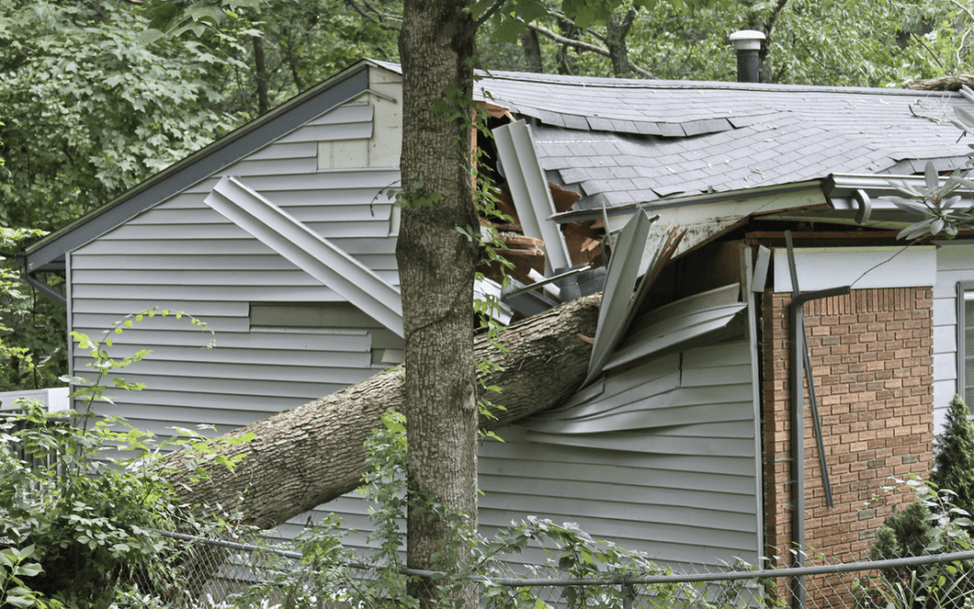 What Should You Do If A Tree Falls On Your Roof?